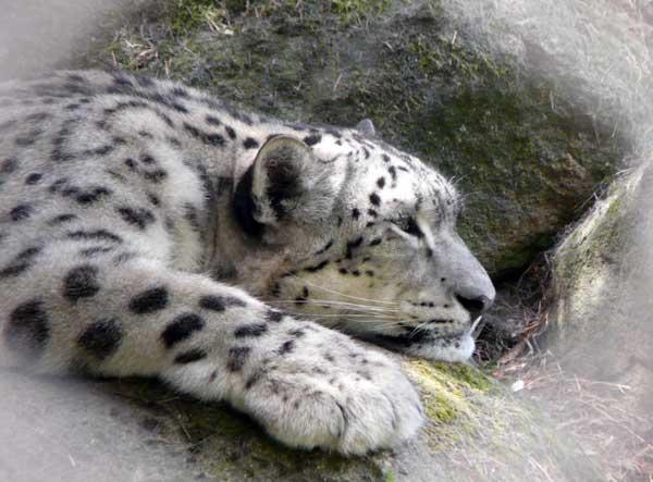 ZooPictureru сайт о животных с фотографиями и описанием